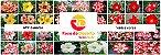 MIX com 30 sementes de flores simples varias cores - Rinoa Chen - Imagem 1
