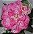 Muda Rosa do Deserto de enxerto com flor tripla na cor Rosa Matizada - EV68 Bola Cor de Rosa - Imagem 1