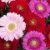 Buquê de Flores Brasília 3 - Imagem 3