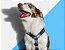 Zeedog Peitoral para Cachorros H Star Wars Millennium Falcon - Imagem 2