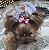 Camiseta para cachorro yorkshire com laço  - Imagem 2