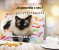 Pacote 10 calendários com frete grátis - Imagem 4