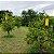 ARMADILHA AMARELA PARA PLANTAS ALTAS 10UN (Yellow Trap Garden) - Imagem 4