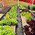 ARMADILHA AMARELA PARA PLANTAS ALTAS 10UN (Yellow Trap Garden) - Imagem 3