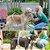 Chuveirinho Pet 360º para cães e gatos - Imagem 4