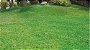 Mousse de Hidrossemeadura de Grama   Hydrograss Spray - Imagem 5