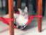 Rede de Cadeira para Gatos - Imagem 1
