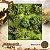 Floresta - Imagem 1