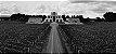 Vinho Tinto Argentino La Posta Malbec Vineyard Blend 750 ml - Imagem 2