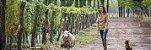 Vinho Tinto Argentino La Posta Malbec Vineyard Blend 750 ml - Imagem 4