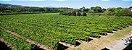 Vinho Verde Português Casal Garcia Rosé 750ml - Imagem 3