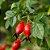 Óleo Vegetal de Rosa Mosqueta - 10 ml - Phytoterápica - Imagem 3
