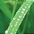 Óleo Essencial de Citronela - Cymbopogon nardus 10 ml (Phytoterápica) - Imagem 2