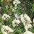 Óleo Essencial de Tea Tree - Melaleuca alternifólia 10 ml (Phytoterápica) - Imagem 2