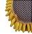 Esponja - Imagem 2