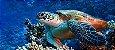 Camiseta Santo Swell Sea turtle Estampada Manga Curta 3 Cores - Imagem 2