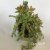 Vaso de Suculentas Mistas - Imagem 6