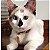 Coleira Pet - Imagem 4