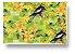 Carteira - Birds - Imagem 1