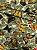 Tecido Gorgurinho Borboletas Verde - Imagem 1