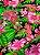 Tecido Gorgurinho Floral Rosa Azul Marinho - Imagem 1