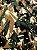 Tecido Tricoline camuflado - Imagem 1