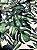 Tecido Jacquard Costela De Adão folhas verde - Imagem 3