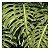 Quadro para parede decorativo Costela De Adão verde - Imagem 3