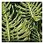 Quadro para parede decorativo Costela De Adão verde - Imagem 4
