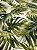 Tecido Jacquard Costela De Adão folhas verde musgo - Imagem 1