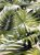 Tecido Jacquard Costela De Adão folhas verde pistache - Imagem 2