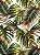 Tecido Jacquard Costela De Adão folhas verde terracota - Imagem 1