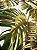 Tecido Jacquard Costela De Adão folhas verde terracota - Imagem 4