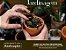 Curso - Cultivo em Vasos - Imagem 1