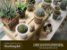 Curso - Mini Jardins - Imagem 1