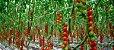 Adubo liquido fertilizante - AgroFert LT - Imagem 7