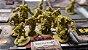 Zombicide: Green Horde - Imagem 4