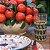 Prato Italia Rústica (sobremesa) - Imagem 2