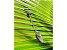 Colar Difusor Fusão Com Quartzo Turmalinado - Imagem 7