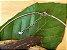 Colar Difusor Redondo em Aro Firme - Amazonita - Imagem 8