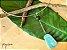 Colar Difusor Redondo em Aro Firme - Amazonita - Imagem 3