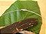 Colar Difusor Redondo Citrino - Pedra Bruta - Imagem 6