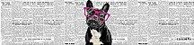 Kit Cozinha  Pet 38 - Imagem 2