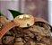 Relógio Feminino Bobobird Ouro - Imagem 6