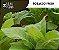 Tobacco Fresh 10ml | VF - Imagem 1