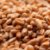 Malte Viking Wheat (trigo) - 25 Kg (SACA) - Imagem 1