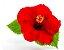 Hibisco Vermelho Flor Pequena - Mudas De 1 Metro! - Imagem 3