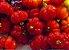 Pitanga Anã Do Serrado - Mudas Livre De Agrotóxicos - Imagem 2