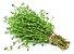 Tomilho - 1 Muda - Cultivo Livre De Agrotóxico! - Imagem 1