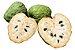 Cherimoia - 1 Muda - Cultivo Livre De Agrotóxicos - Imagem 1